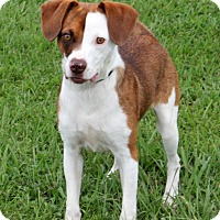 Adopt A Pet :: Frogger in Natchitoches, LA - Austin, TX