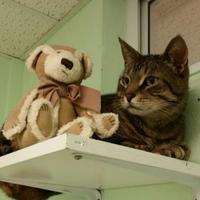 Adopt A Pet :: Milo - Canastota, NY