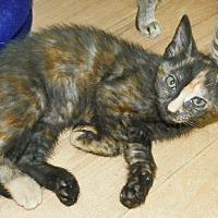 Adopt A Pet :: Sassy - Fort Pierce, FL