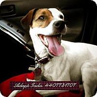 Adopt A Pet :: Jada - Grafton, OH