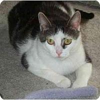 Adopt A Pet :: Mia - Jenkintown, PA