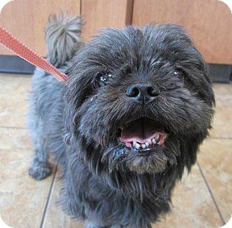 Shih Tzu Dog for adoption in Oak Ridge, New Jersey - April-SWEET!