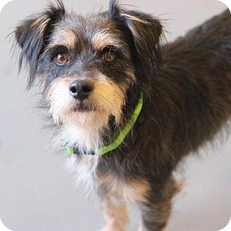 Terrier (Unknown Type, Medium) Mix Dog for adoption in Atlanta, Georgia - Kryten