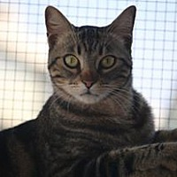 Adopt A Pet :: Avatar - Riverside, CA