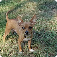 Adopt A Pet :: Ernie - Brattleboro, VT