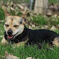Adopt A Pet :: Sawyer - Eldora, IA