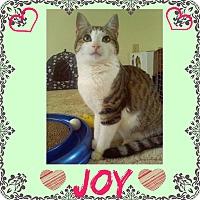 Adopt A Pet :: Joy - Jeffersonville, IN
