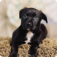 Adopt A Pet :: Marlin - Portland, OR