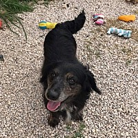 Adopt A Pet :: Turbo - York, SC