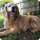 Adopt A Pet :: Sorrel