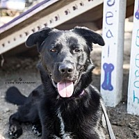 Adopt A Pet :: Maverick 2 - Seal Beach, CA