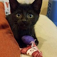 Adopt A Pet :: Delray - LaGrange Park, IL