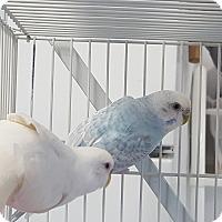 Adopt A Pet :: Babs and Peach - Grandview, MO