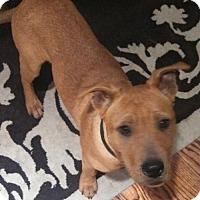 Adopt A Pet :: Stryker - Houston, TX