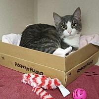 Adopt A Pet :: Stewart - Hollywood, MD