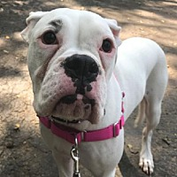 Adopt A Pet :: Leia - Brentwood, TN