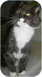 Domestic Mediumhair Cat for adoption in Strathmore, Alberta - Fluffy