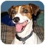 Photo 1 - Jack Russell Terrier Dog for adoption in Thomasville, North Carolina - Karma