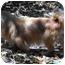 Photo 4 - Pekingese Dog for adoption in Virginia Beach, Virginia - Ruby  Adopted !!!