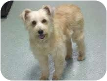 Wirehaired Fox Terrier Mix Dog for adoption in Foster, Rhode Island - Molly