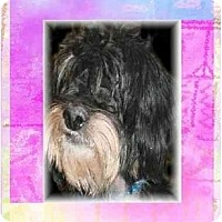 Adopt A Pet :: Nelson - Mays Landing, NJ