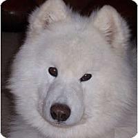 Adopt A Pet :: Sampson - Arvada, CO
