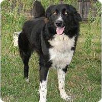 Adopt A Pet :: Katie - Newcastle, OK