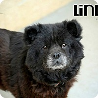 Adopt A Pet :: Lindy - Tillsonburg, ON