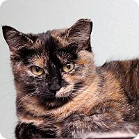 Adopt A Pet :: Puzzle - San Antonio, TX