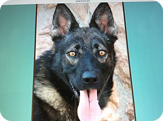 German Shepherd Dog Mix Dog for adoption in Los Angeles, California - BURKE VON BURLIN