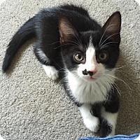 Adopt A Pet :: Danny Crawford - Turnersville, NJ