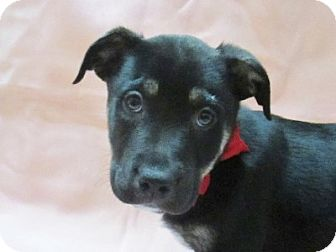 Mixed Breed (Medium) Mix Puppy for adoption in Lloydminster, Alberta - Joey