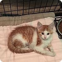 Adopt A Pet :: Quinn -Adoption Pending! - Colmar, PA