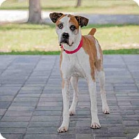 Adopt A Pet :: WILLIE - Vero Beach, FL