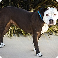 Adopt A Pet :: Mina - Berkeley, CA
