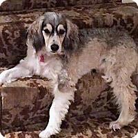 Adopt A Pet :: Jake - Sudbury, MA