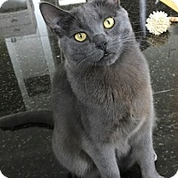 Adopt A Pet :: Ashlea - Vancouver, BC