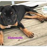 Adopt A Pet :: Tinkerbell - Plainfield, IL