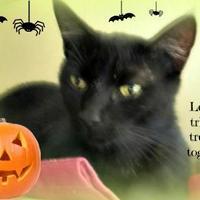 Adopt A Pet :: Denali - Winfield, KS