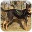 Photo 1 - German Shepherd Dog Mix Dog for adoption in Overland Park, Kansas - Rocky