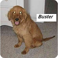 Adopt A Pet :: Buster - Chandler, IN