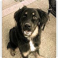 Adopt A Pet :: Scarlett - Hartsville, TN