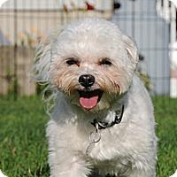 Adopt A Pet :: Toby - Blairstown, NJ