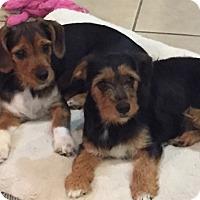 Adopt A Pet :: Elliot - Katy, TX