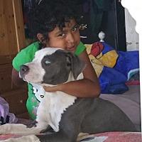 Adopt A Pet :: Ace - Bellflower, CA