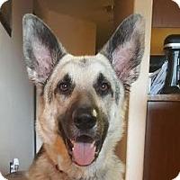 Adopt A Pet :: Zeus - Dripping Springs, TX