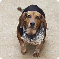 Adopt A Pet :: Mrs. Yarma Chubbs - Marietta, GA