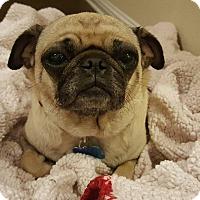 Adopt A Pet :: Melli - Austin, TX