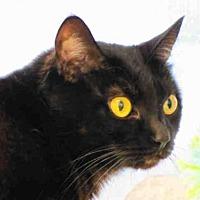 Adopt A Pet :: MARYANNE - Bonita, CA