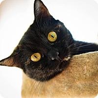 Adopt A Pet :: Hope - Stafford, VA